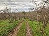 Bağ & Bahçe imarlı arsa