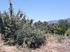Köyceğiz toparlarda 809 m2 arsamız satılıktır - Satılık Arsa İlanları sahibinden.com'da
