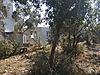 Köyceğiz zeytinalanında müstakil tapu 1869 m2 tarlamız satılık - Satılık Arsa İlanları sahibinden.com'da