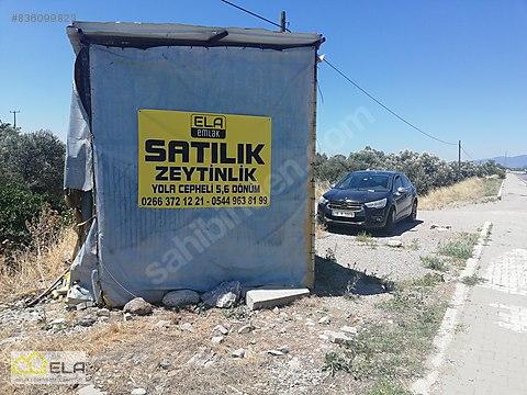 ELA'DAN CEM ZEYTİN KARŞISINDA YOLA SIFIR 5,5 DÖNÜM...