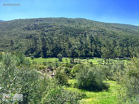 doğa ile iç içe panoramik doğa manzaralı arazi