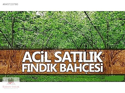 ### ACİL SATILIKKK HENDEKTE 7345 M2 FINDIKLIK ###