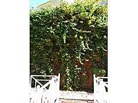 لوکس هومز lthmb_6828064324ay خرید آپارتمان  در Alanya ترکیه - قیمت خانه در Alanya - 5699