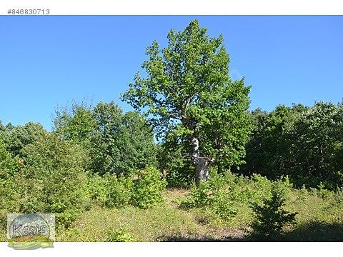 2.542 m2 Orman İçinde Tarla. Köye 2 km Gönen e...